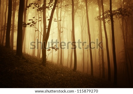 autumn in forest at sunset