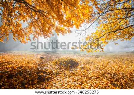 Autumn in german Mountains and Forests - Hiking tour through average mountains with this beautiful landscape, panorama and nature photos. Location was close to Feldberg / Taunus - Frankfurt am Main.