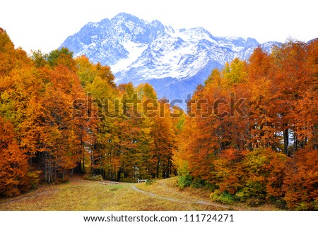 Autumn in High Mountains. Sochi, Russia. Krasnaya Polyana.