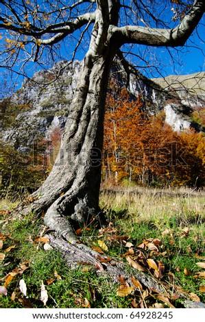 Autumn in italy mountain