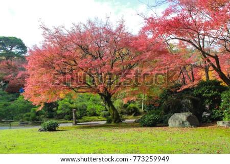 Autumn in Japan  - Shutterstock ID 773259949