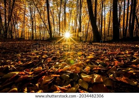 Autumn in La Fageda D En Jorda Forest, La Garrotxa, northern Spain. Foto stock ©
