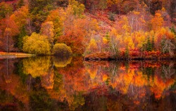 Autumn in Lake District.Colourful trees reflecting in calm water surface.Bright and vibrant landscape scene.Nature background.Autumn walk.