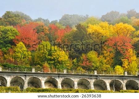Autumn in Lavaux Switzerland