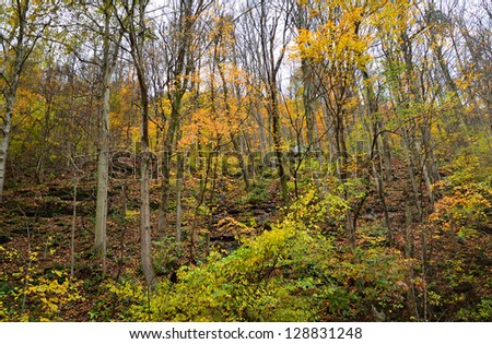 Autumn in mountain forest