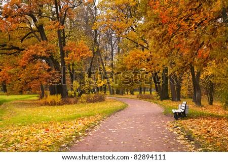 autumn in park #82894111
