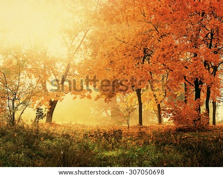 autumn in sunny forest, natural background #307050698