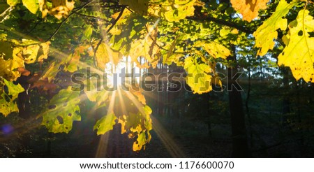 Autumn in the deciduous forest #1176600070