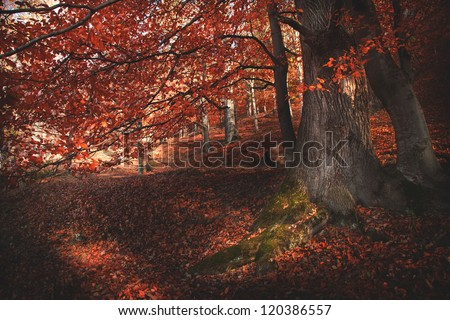 Autumn in the forest | Detail of a tree with red leaves | Nature wallpaper