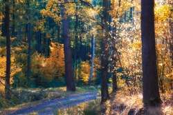 Autumn in the forest in Poland
