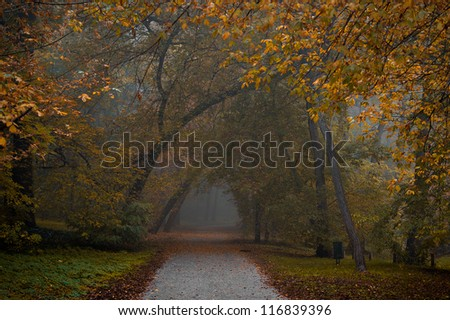 Autumn in the forest. Narrow road into the fog.