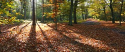 Autumn in the forest or woods in the Netherlands. Nice forest scenery with fall leaves and sunlight. Autumn forest nature andscape.