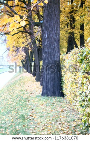Autumn in the Park and on the streets, defoliation, yellow leaves, mushrooms on the lawn. Walking along the city streets and alleys of the Park