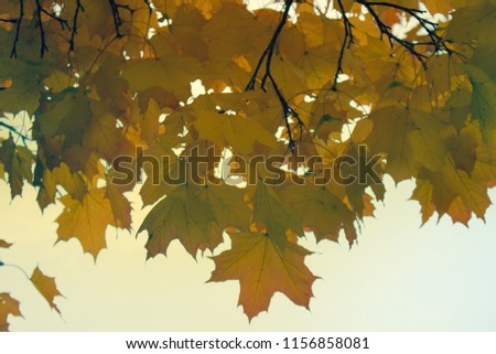 Autumn in the Park and on the streets, defoliation, yellow leaves. Walking along the city streets and alleys of the Park