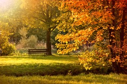 Autumn in the park. Fall in forest.