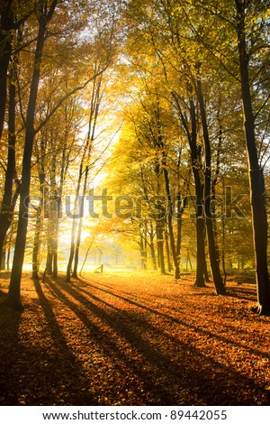 Autumn in the woods in the Netherlands.