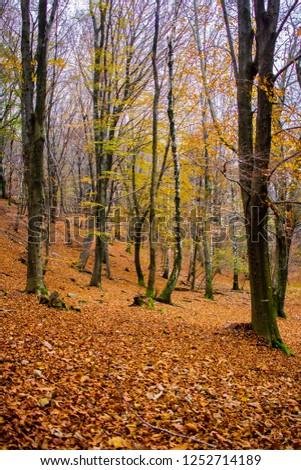 Autumn in woodlands