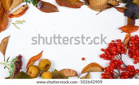 autumn inspiration. frame on white background #502642909