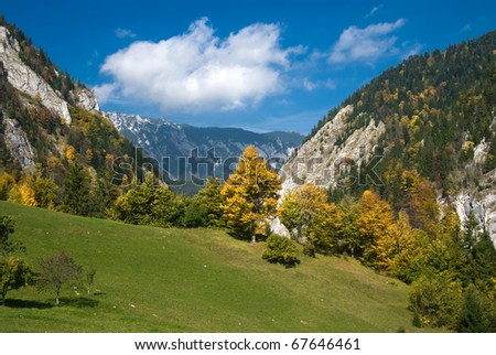 Autumn is coming in romanian mountains (Carpathians). The image is made in village of Magura