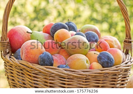 Autumn is rich in fruits