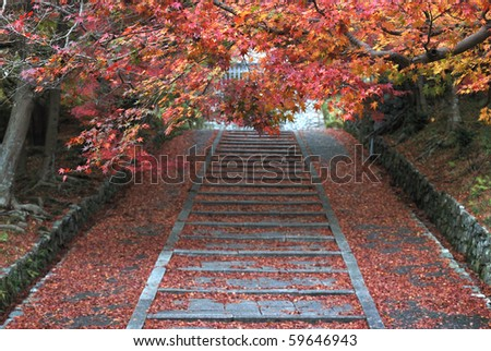 Autumn Japanese footpath with Maple - stock photo