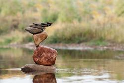 Autumn lake balance