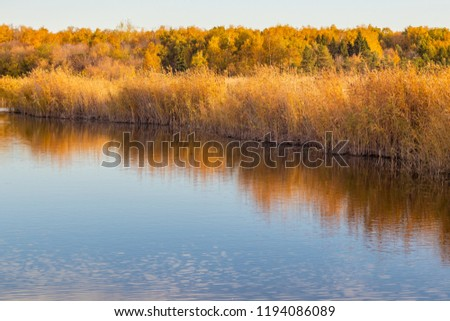 Autumn lakeside with forest and reeds under a blue sky. On the shore of the pond in the autumn sunny day. Golden reeds reflect on the surface of calm water. Beautiful landscape #1194086089