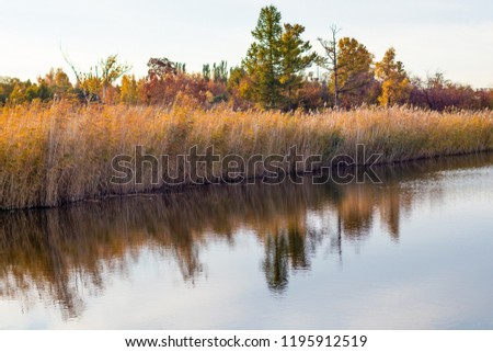 Autumn lakeside with forest and reeds under a blue sky. On the shore of the pond in the autumn sunny day. Golden reeds reflect on the surface of calm water. Beautiful landscape  #1195912519