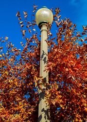 Autumn Lamp - An October scene at Pacific Park - Bend, OR