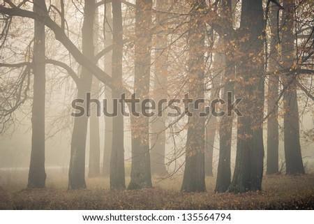 Autumn landscape at misty morning