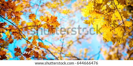 Stock Photo Autumn landscape. Autumn oak leafes, very shallow focus