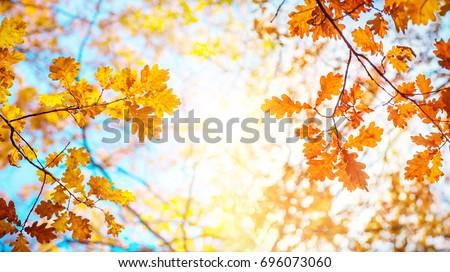 Autumn landscape. Autumn oak leafes, very shallow focus.