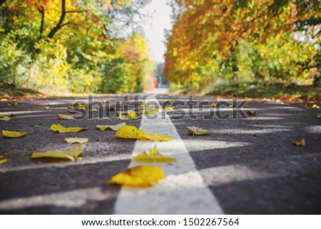 Autumn landscape. Autumn Park. Autumn days. Autumn mood. Carpet of leaves.
