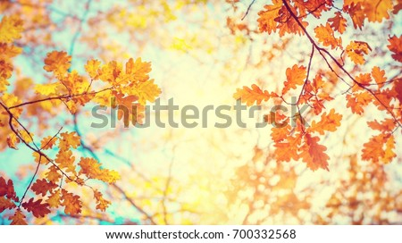 Autumn landscape. Autumn tree leaves sky background. #700332568
