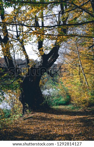 Autumn Landscape Background. Golden, Beautiful Yellow and Orange lice on Trees in the Park, vertical photo