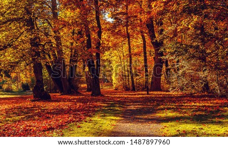 Autumn landscape beautiful colored trees in the forest, glowing in sunlight. wonderful picturesque background. color in nature. gorgeous view. Amazing nature landscape.  #1487897960