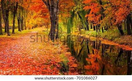 Autumn landscape beautiful trees with colored leaf over the river, glowing in sunlight. wonderful picturesque scenery. color in nature. gorgeous, amazing scene. creative image. artistic picture