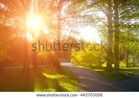 Autumn landscape, colorful autumn nature in nice sunny weather at sunset