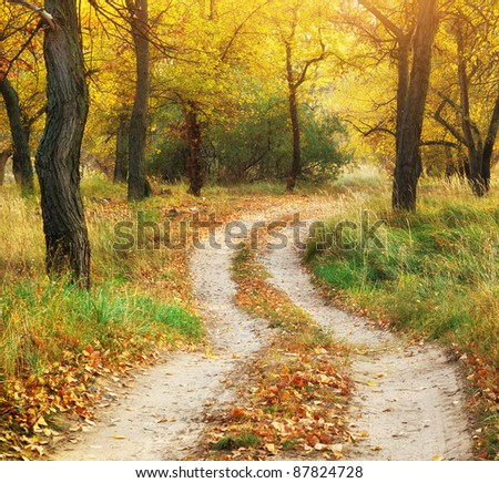 Autumn landscape. Composition of nature.