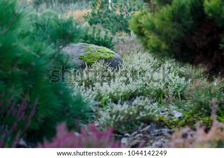 Amazing Autumn Landscape Design, Big Stone With Moss In A Garden Design. #1044142249