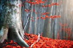 Autumn landscape, Fall scene. Beautiful Autumnal park with colorful bright red leaves and old trees. Beauty nature scene. Trees and Leaves, foggy forest, fantasy landscape