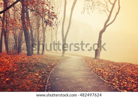 Autumn landscape - foggy autumn park alley with bare trees and dry fallen colorful leaves.Lonely walkway in the deserted park in the fog - picturesque landscape in cloudy day. Creative filter applied