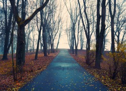 Autumn landscape- foggy autumn park alley with bare trees and dry fallen orange autumn leaves