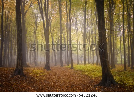 autumn landscape from a forest with colorful leafs and fog