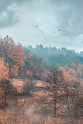 Autumn landscape. Gloomy mood. Dark sky. Birds fly in heaven. Orange and yellow trees. Woods in the fog. Beautiful fall nature. Sunrise behind the clouds.