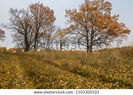 Autumn landscape in a cloudy evening is full of melancholy. Lonely trees with withering foliage amidst the desolate expanses.