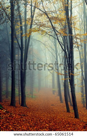 Autumn landscape in foggy wood with a track