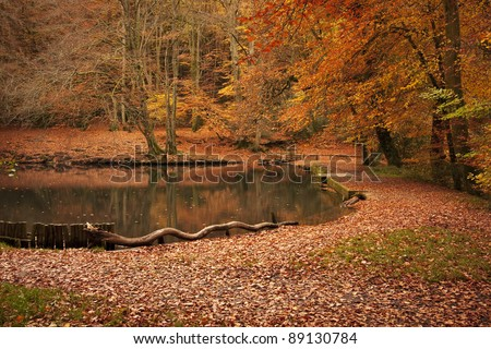 Autumn landscape in forest woods with a lake, lots of red and orange leaves on the ground. Taken at Waggoners Wells in Grayshott, Hampshire, England.