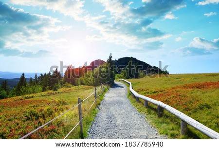 Autumn landscape in National park Bayerischer Wald at sunset, top of the mountain Grosser Arber, Germany. Stock foto ©