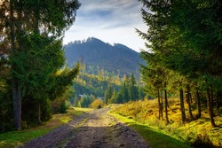 Autumn landscape in the Carpathians. A dirt road leads to the mountain peaks. Early autumn in the highlands
